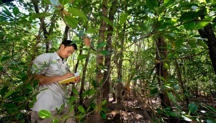 CDU student Sigit Sasmito taking research notes in the forest