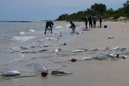 fish in net on beach with fishers