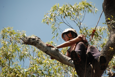 Cara Penton climbing up a tree to investigate tree hollows on the Tiwi Islands.