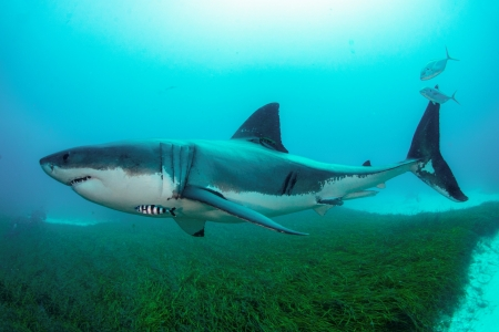 shark-action-plan
