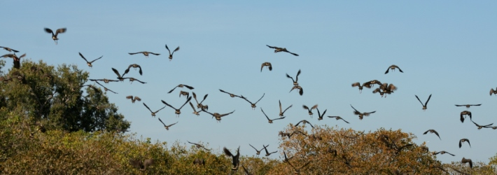 NT Birds in flight