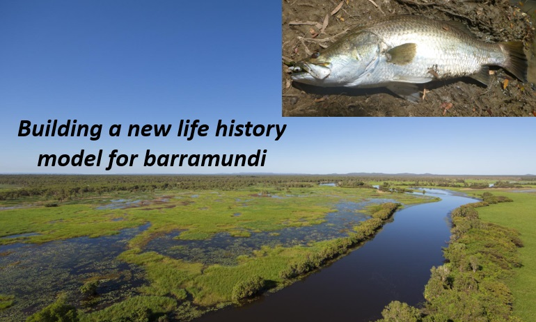 Building a new life history model for barramundi