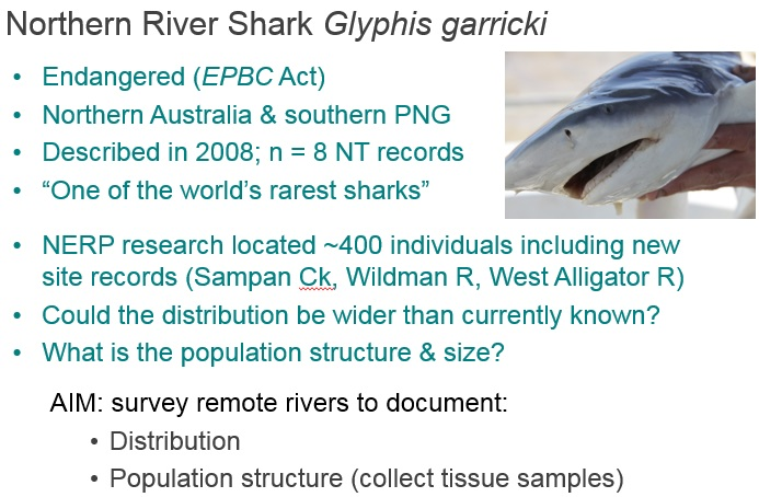 Surveying remote Northern Territory rivers for the Endangered Northern River Shark Glyphis garricki: understanding distribution and population for management