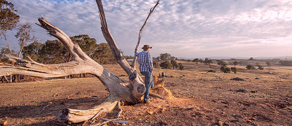 Charles Darwin University has joined peak organisations in the NT and WA to boost drought resilience