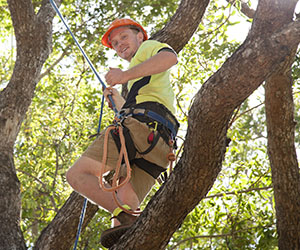 Hayden Connelly learns tree climbing techniques as part of CDU's new arboriculture course
