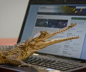 """CrocBITE, the Worldwide Crocodilian Attack Database"" has been launched at Charles Darwin University"