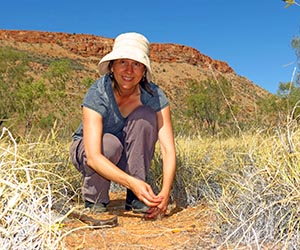 Dr Schlesinger … investigating the effect of buffel grass on interactions between native fauna and flora