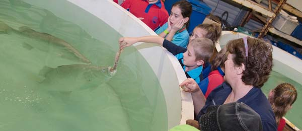 Students feed the barra at the CDU Aquaculture Centre as part of their Children's University activity