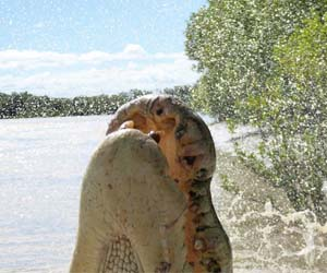 An interactive tool will offer a new way to look at global croc attacks