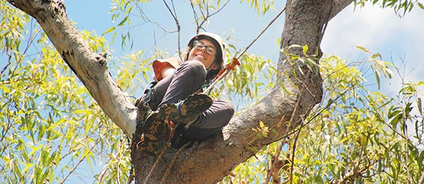 PhD candidate Cara Penton's research tracking small mammals on the Tiwi Islands has taken her to great heights