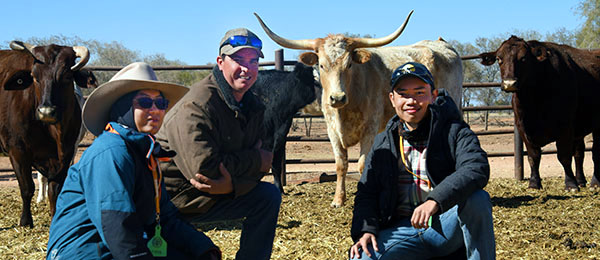Trainer Matt Deveraux (centre) with Firdha Aulia and Juan Dylan at the Bohning Cattle Yards