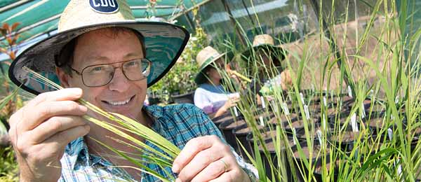 Dr Sean Bellairs is part of a team growing three species of native rice