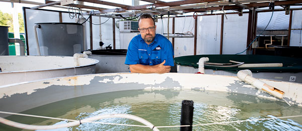 CDU Aquaculture Lecturer Morris Pizzutto is teaching aquaculture students to grow tiny Banana Prawns for use in NT Aquaculture