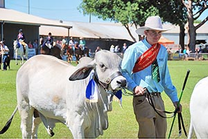Vocational Education and Training in School student Charles Lander leads Iggy at the Katherine Show