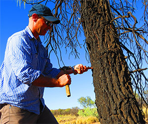 Andrew Schubert measures the bark of a corkwood near Alice Springs
