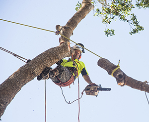 Student Steve Waters practises tree removal as part of his training