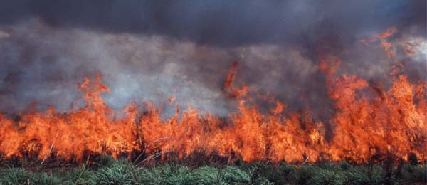 Researchers hope to improve the understanding of the impacts of weed invasion, land clearing and changes to fire patterns