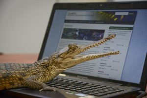 Attack database to inform croc conservation