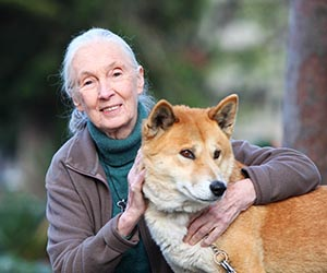 Dame Jane Goodall gives dingo research a pat on the back. Photographer: Phil Hines