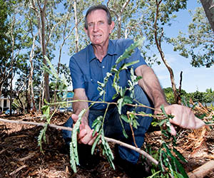 Facilities Management Director Bill McGuinness holds coffee bush that was removed as part of Charles Darwin University's new Weed Management Plan. Photo: Julianne Osborne