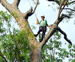 CDU PhD candidate Cara Penton climbs trees to search for hollows, as she researches the impact of fire regimes on arboreal small mammal species.
