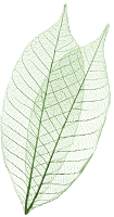 Leaf for RIEL quick link
