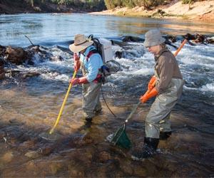 The team has secured funding to forecast the resilience of freshwater fish species in Northern Australia
