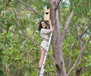 CDU PhD candidate Cara Penton installs a custom-made nest box in a tree at the Casuarina woodland