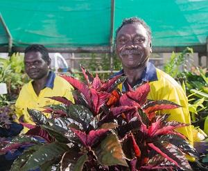 The Tiwi Islander students observed horticultural industries around Darwin. From left: Jeremiah Black and Paul Ullungura