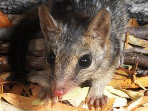 CDU's Professor Michael Lawes contributed to research that identifies feral cats as a major cause of declining numbers of tropical mammals