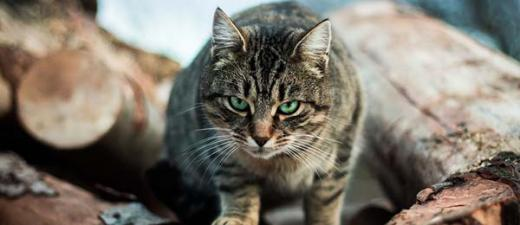 Feral and pet cats are taking a huge toll on biodiversity. Image: Anton Darius