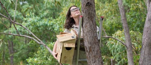 PhD candidate Cara Penton installs a custom-made nest box in a tree at the Casuarina woodland
