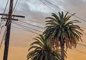 Palm trees and electrial pole in sunset