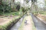 An example of the subak irrigation system and irrigated fields in Ubud